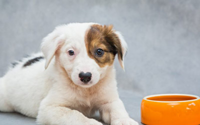 5 Possible Reasons Why Your Dog Is Not Eating Like Before