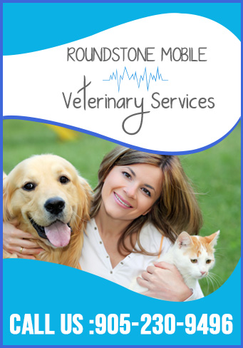 Mobile Vet Services
